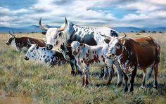 The Big Mondplaas Nguni Oil, – Revisited Farm Pictures, Cow Painting, Cow Art, Cattle, Farm Animals, Pet Birds, Africa, Artist, Livestock