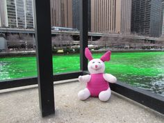 Dyeing the River Green in Chicago for St Patrick's Day