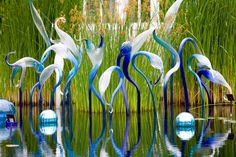 Wish I had gone to see this - the Chihuly Glass Sculpture Exhibit at the Dallas Arboretum, 2012.