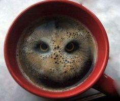 Καλλιτέχνης σχημάτισε κουκουβάγια στο καϊμάκι του καφέ!