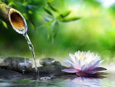 5 idées pour faire un jardin zen - Femme Actuelle