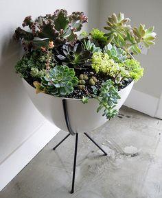 """Ajanduskeskus Hortes on puutarha-alan """"tavaratalo"""". Se on ketjuliikkeiden tyyppinen, ja sieltä löydät paitsi kasvit myös tarpeita puutarhan sisustamiseeen. Kasveja on laidasta laitaan. Täältä saatat löytää esimerkiksi goji-marjoja tuottavan pensaan. Hortes sijaitsee Tallinnan rajalla, Laagrissa, Pärnun suuntaan ajettaessa. #hortes #eckeröline"""