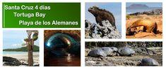 Galapagos Islands, Tours, Tour Guide, Water, Travel, Outdoor, Santa Cruz, Guayaquil, Beaches