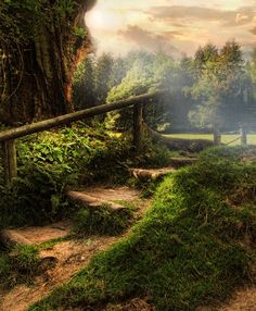 forests, stairs, stairway, heaven, path, magical forest, garden, forest stair, netherlands