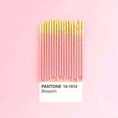 Pantone Pink!