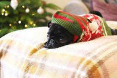 Zoella | Nalas Christmas Photoshoot