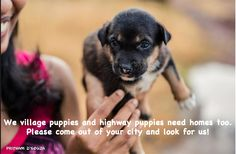 Adopt a village pup or highway pup. There are thousands right now and most will not live to grow up!