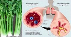 This Is What Actually Happens When You Consume Celery Every Day For An Entire Week! I Had No Idea (This Is What Actually Happens When You Consume Celery Every Health And Nutrition, Health And Wellness, Health Tips, Asthma Symptoms, Heart Health, For Your Health, Health Remedies, Asthma Remedies, Get Healthy
