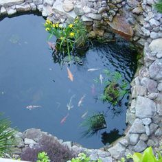 29 Creative Koi Pond Projects You Can Create Yourself To Add Beauty To Your Backyard Backyard Water Feature, Ponds Backyard, Koi Ponds, Garden Ponds, Backyard Ideas, Garden Path, Shade Garden, Pond Landscaping, Landscaping With Rocks