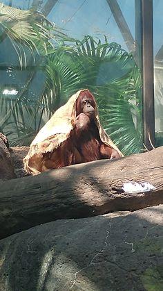 Cleveland zoo ❤ Cleveland Zoo, Animals, Animales, Animaux, Animal, Animais
