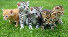This extensive list of cat facts will turn you into a feline expert!