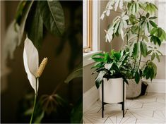 Do you live in a dark home or an apartment with low-lighting? Are you looking forHouseplants That Need (Almost) Zero Sunlight or houseplants that are easy to care for? You're in the right spot, I am here to help with 10 of my favorite low-light houseplants.