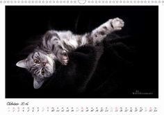 Schmuse Kätzchen - CALVENDO Kalender von Martina Wrede - #cats #katzen #kalender