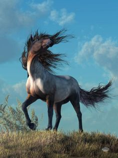 Wow! Now that is a sassy horse head toss! What spirit! Beautiful horse!