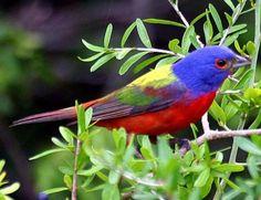 Top 24 Unique Colorful Creatures Around The World