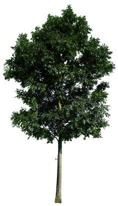 Tree 48 png by gd08.deviantart.com on @deviantART
