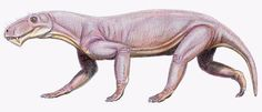 Lycaenops  //The late Permian therapsid Lycaenops, a typical gorgonopsid. This animal was about the size of, and a large dog.