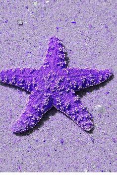 Purple starfish...