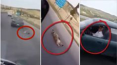 A motorist that was driving alongside the Amman-Irbid highway in Jordan was left stunned when he spotted a dog being dragged ...