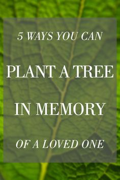How To Plant A Memorial Tree In Honor Of Loved One Plants
