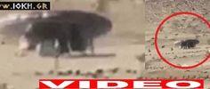 ΘΕΤΙΚΗ ΕΝΕΡΓΕΙΑ: ΑΤΙΑ  UFO στη Σαουδική Αραβία!!Απίστευτο video
