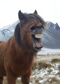 Lysyholl farm - Horseback Riding and Accomodation - Snaefellsnes pennisula