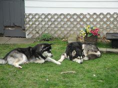 Jaxxon And his DogDad