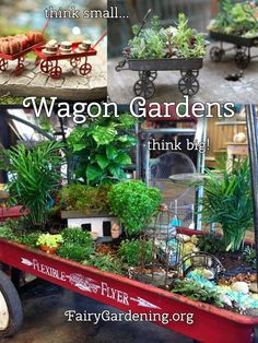 Wagons make the perfect portable gardening container. The problem is usually finding plants that love shallow containers. That's where grass comes in. You can easily grow grass in a wagon and make it into the perfect fairy garden. Your kids … Continued