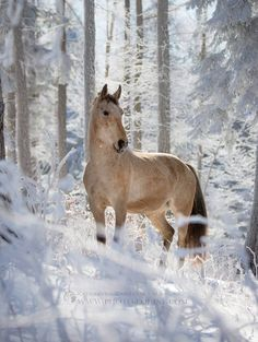 Nice 25 Best Christmas Horse https://meowlogy.com/2017/11/14/25-best-christmas-horse/ When it regards the solar Christmas lights there are a lot of choices that will make your home seem great.