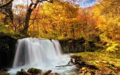 Download wallpapers waterfall, autumn forest, yellow trees, autumn, river, yellow leaves