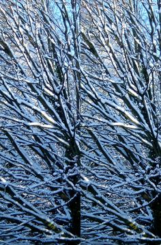 Stereogram Snow Tree