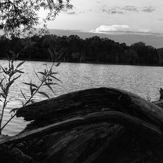 Driftwood #bwphotography #photography #blackwhitephoto