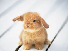 """""""People think our intense love of bunnies is creepy at our age, but time will show them to be heartless bastards."""" - Burton Guster"""