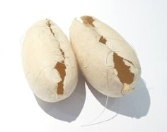 Ann Symes - Pods - handmade Indian paper