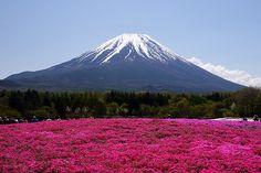 Monte Fuji | Insolit