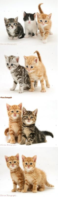 Cats Kittens Video Compilation 2015 NEW The Most Popular and Fun ! ?     MORE KITTENS HERE:  http://www.youtube.com/user/TheFederic777?sub_confirmation=1  FACEBOOK:  https://www.facebook.com/KittensLoveForever/  GOOGLE +: https://plus.google.com/u/0/115624639852623703105/posts  BLOG:  http://look-how-cute-kittens-2.blogspot.com/  BLOG:  http://make-dogs-be-happy.blogspot.com/  #KittensCatsMeowing #KittensCatVideo   #KittensCatsFunny #KittensCatCompilation