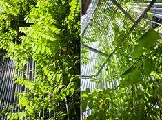 vo trong nghia architects green renovation hanoi vietnam designboom