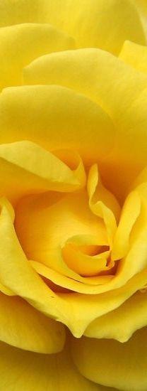 yellow  #huedunnit @Ruta Savica HOUSE School of Color and Light