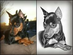 Animal Drawings, Pencil Drawings, Pincher Dog, Min Pins, Pet Art, Miniature Pinscher, Viper, Doberman, Painted Rocks