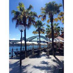 Sydney harbour bridge #sydney #sydneyharbourbridge #palmtrees by meg_dunning1 http://ift.tt/1NRMbNv