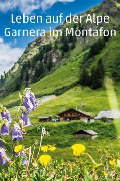 Die Alpe Garnera liegt fast ein bisschen versteckt im Garneratal. Und ihre Bewohner hüten einen besonderen Schatz: Veronika und Christian produzieren Sura Kees, ein Wahrzeichen des Montafons. Wir haben bei der Käse produktion über die Schulter geschaut. #alpe #alm #montafon #kaese #käse #surakees #visitvorarlberg #myvorarlberg Mountains, Nature, Travel, Hiking Trails, Shoulder, Landscape, Vacation, Life, Naturaleza