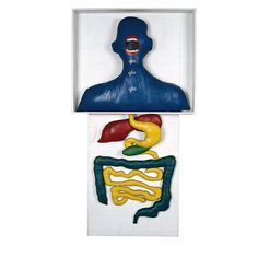 As a young artist, living under Brazil's military government, Anna Maria Maiolino used painting, photography, video and paper collage as an outlet to express her anxieties under the regime and her displacement in the New World, as well as her identity as a mother and daughter. Later, in a democratic Brazil, she made equally poignant drawings and works in clay and plaster, which explore more elemental themes of hunger and nourishment, ritual and obsession. For example,  Glu Glu Glu (1967)…