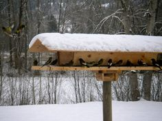 Big bird feeders are a good choice for large yards. Description from allbirdcage.com. I searched for this on bing.com/images