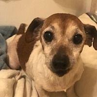 Pin By Dajana Lukic On Dogs For Rescue In 2020 Pet Adoption Dachshund Adoption Dog Adoption