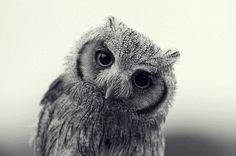 Don't you think that this owl has something really special?