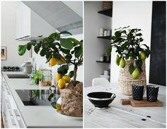 10 Mejores plantas de interior