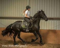 friesian horse dressage