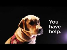 Service Dog Appreciation from Petco and Natural Balance