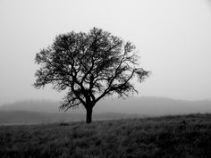 Black & White Photography Photo Critique – The Tree