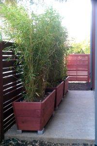 cedar planters designed for growing bamboo Bamboo Planter, Cedar Planters, Growing Bamboo, Design Concepts, Garden Ideas, Deck, Backyard, Gardening, Plants